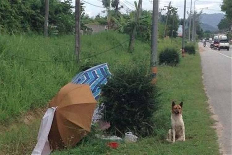 飼い主が迎えに来ることを信じ頑なに動こうとしない犬が最後は人の愛に救われる