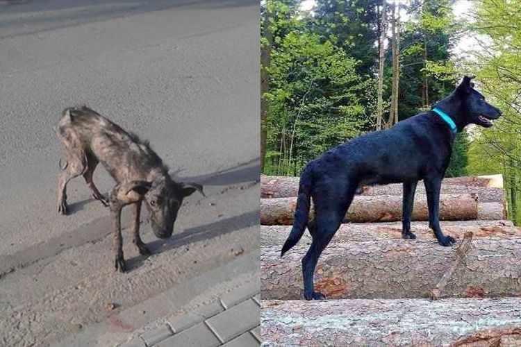 餓死寸前の犬が奇跡の回復を見せた背景にはひとりの女性の優しさがあった