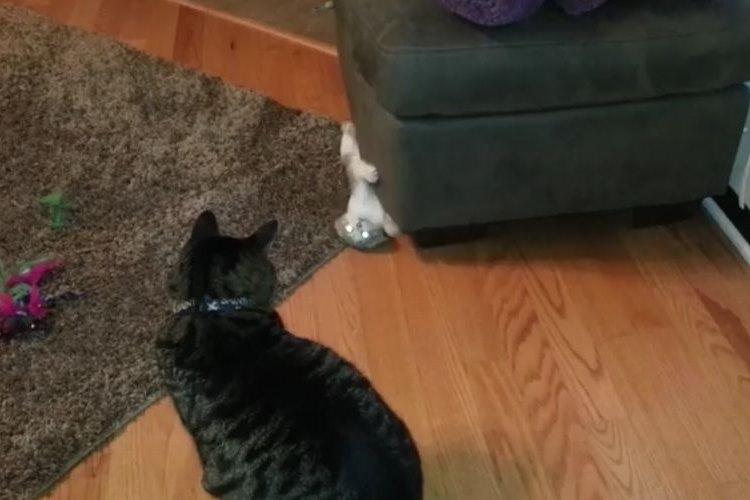「スキありにゃっ」イタズラ好きの子猫が繰り出す三連撃がカッコ良い!
