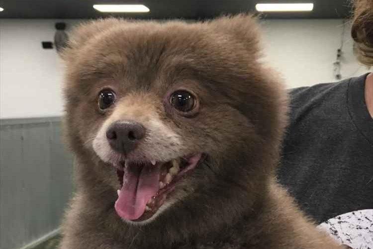 小熊?それとも犬?インターネット上で1枚の画像が話題に!