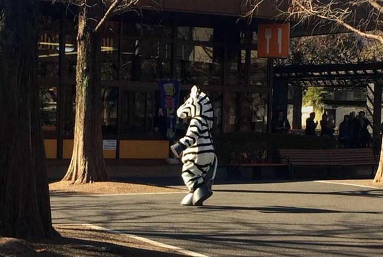 上野動物園でシマウマが脱走!?訓練の様子がシュールで笑った