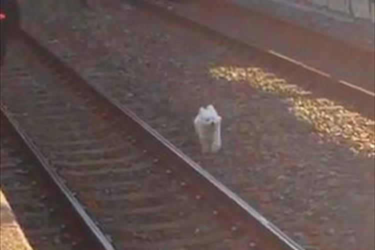 【動画】東武スカイツリーラインが遅延した原因!駅員さんは必死で捕まえようとするも…