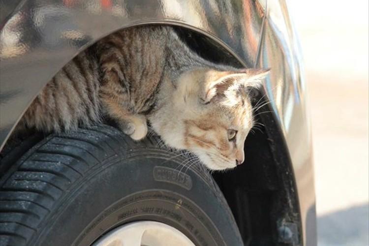 """寒い冬、車に乗る前に""""猫バンバン""""していますか?小さな思いやりで救える命"""