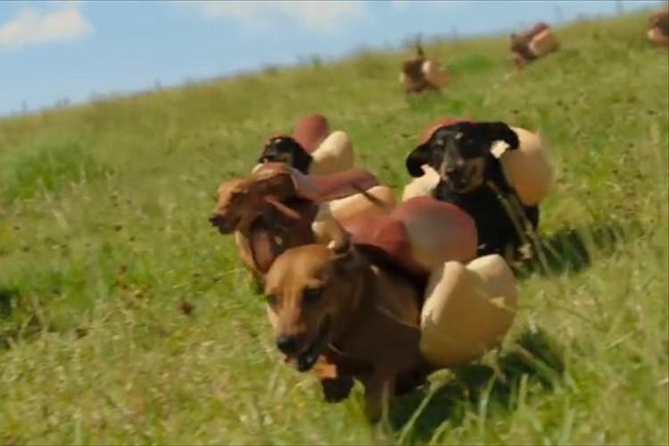 【動画】公開10日で600万回再生!ホットドッグ姿のワンコが草原を走ってどこへ行く?