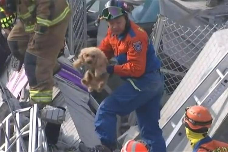 犬だって人間と同じ命!一匹の犬の救助に尽力した隊員達…命をつなぐリレーが話題!