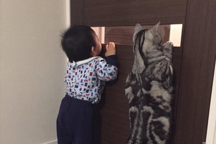 この子たち兄弟?背伸びして何かをのぞきこむ赤ちゃん&ニャンコが可愛い!