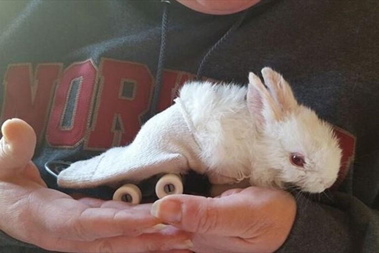 """後ろ脚が麻痺したウサギが""""スケボー車椅子""""で自由に動けるようになった!"""