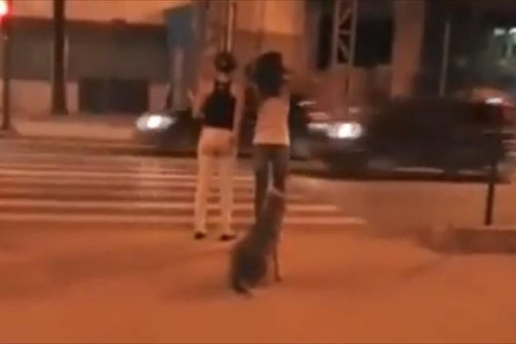 【動画】犬の方がえらい!信号を無視して渡る女性たちと青になるまで待つ犬