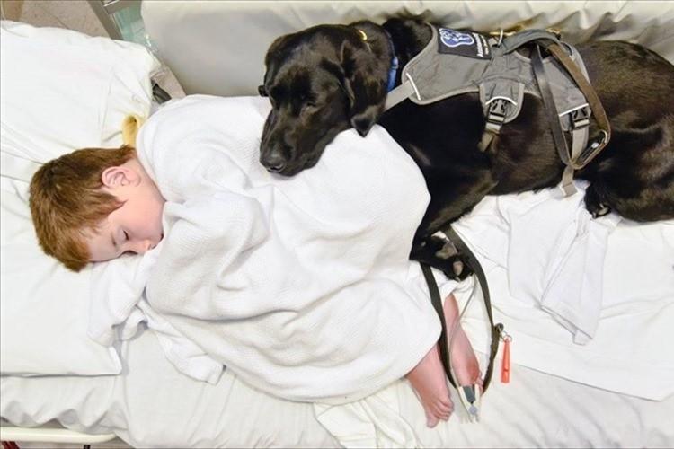 「大丈夫。君と僕はつながっているから」自閉症の少年を支える介助犬