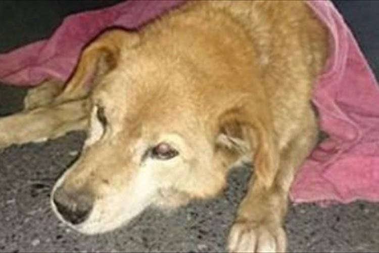 「どうしても気持ちは入ってしまった」老犬を救出した警察官達の行動に称賛の声