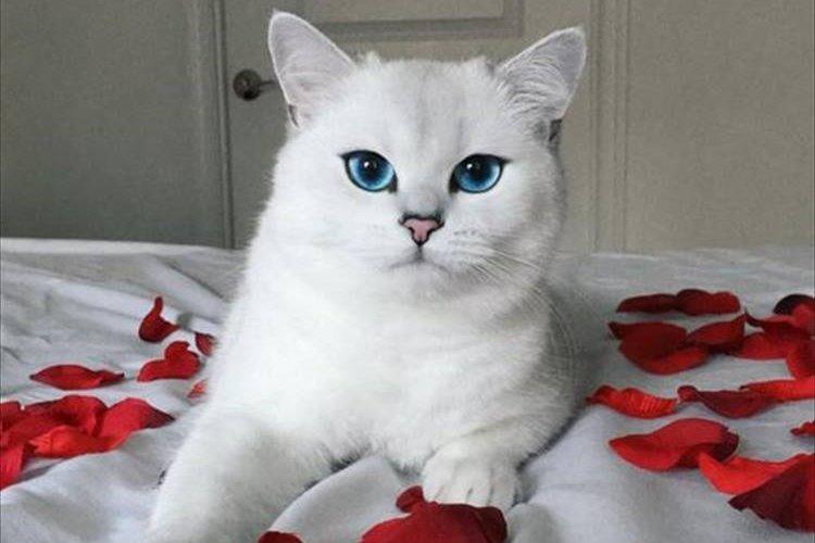 宝石のようなブルーの瞳。見た人を虜にする魔性のネコが美しすぎる