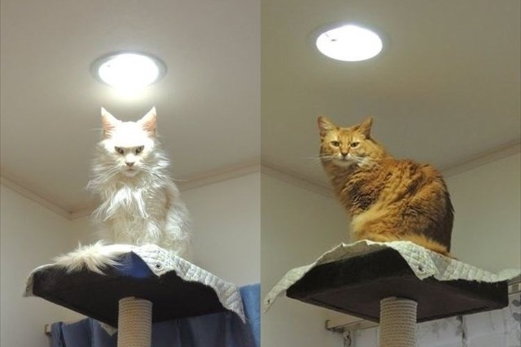 「同じ場所にいるのに威圧感が違う」カメラに写るキメ顔が迫力満点すぎるネコ