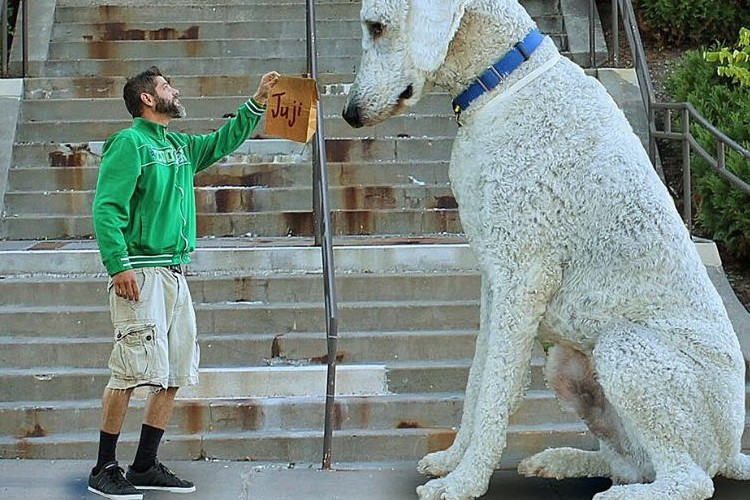 ウチの犬、超巨大になっちゃったんですけど...