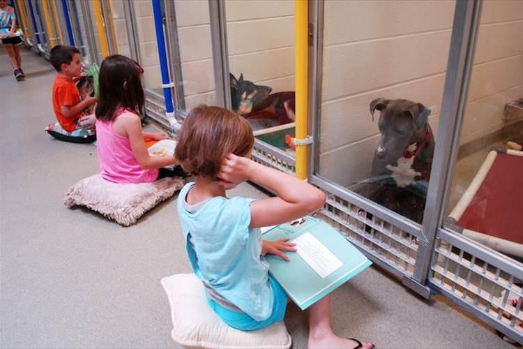 「友達になろうよ」子供たちのやさしい読み聞かせが不安がる犬を救う