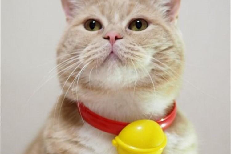 """ハッピーセットで貰った""""ドラえもんの鈴""""をウチの猫につけてみたら"""