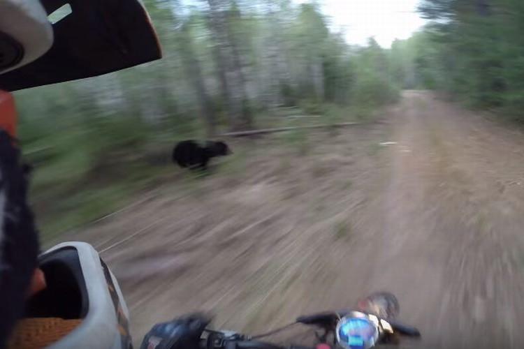 【危機一髪】これはヤバイ!バイクで山道を走っていたらクマが横切った決定的瞬間