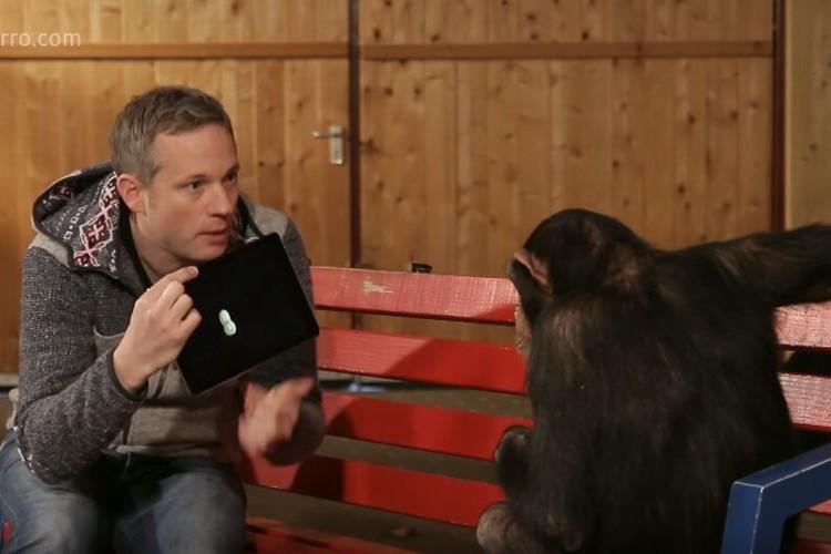 もしもチンパンジーに手品を見せたら。見事に引っかかる大混乱っぷりがかわいい