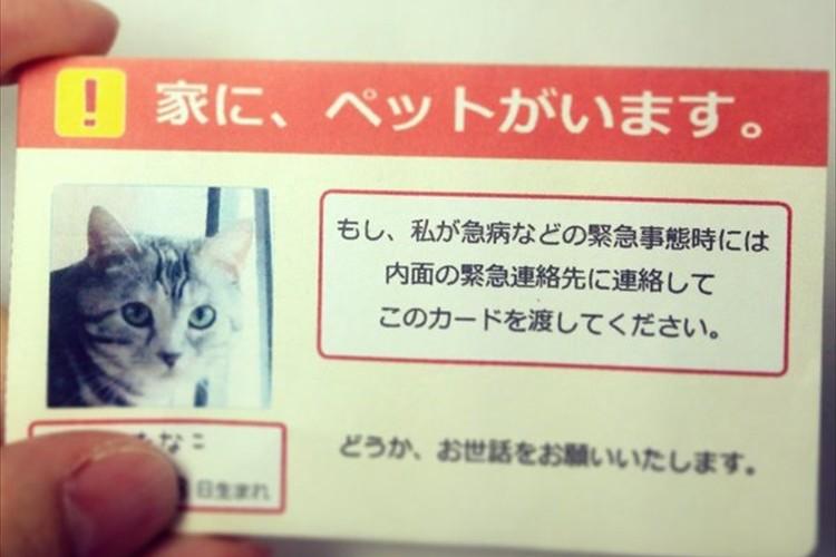 """自分にもしもの事があった時、""""家にペットがいる事を伝えるカード""""が話題に!"""