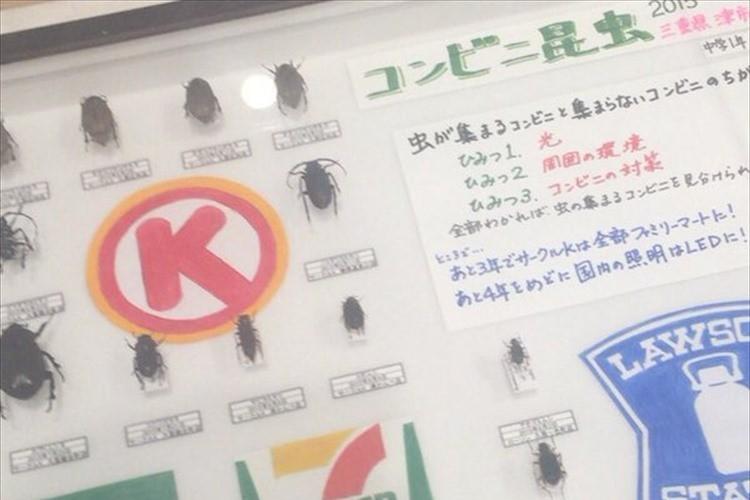 """「サークルKは虫が集まりやすい」中学生の""""コンビニ昆虫""""調査研究が興味深いと話題に!"""