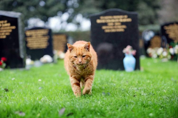 「芝生で一緒に寝てくれた」墓場に20年間住み、人の悲しみを癒してきた猫が天国へ
