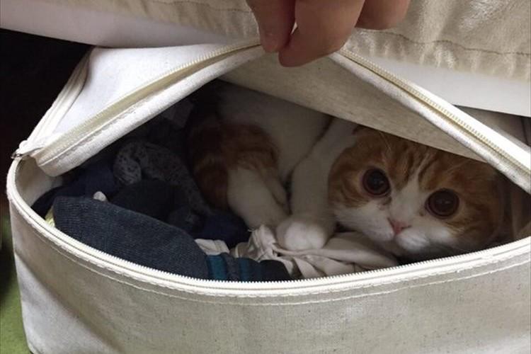 猫の毛対策用で購入した衣装ケース…チャックを閉め忘れたら、こうなっちゃった♪