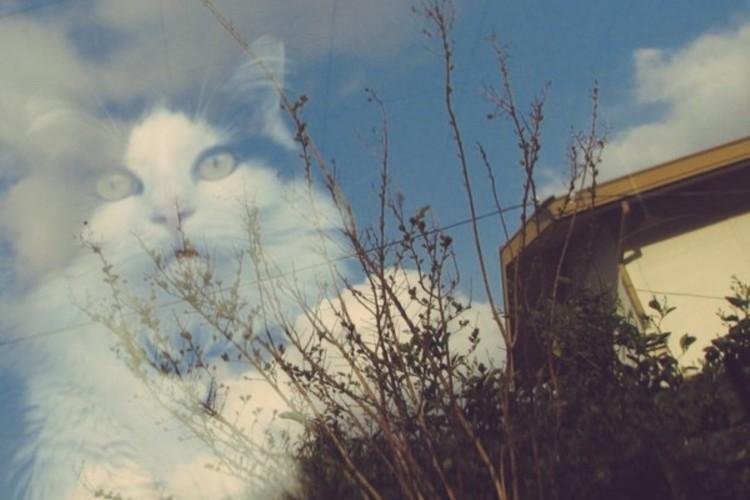 窓に映り込んだ猫が良い味出している奇跡のショット