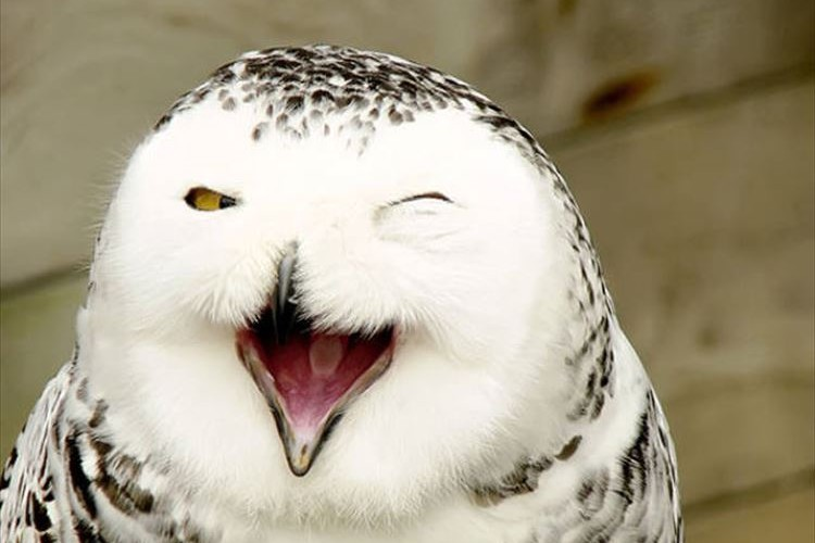ごきげんだぜ!!ニッコリ笑顔の動物たち15選