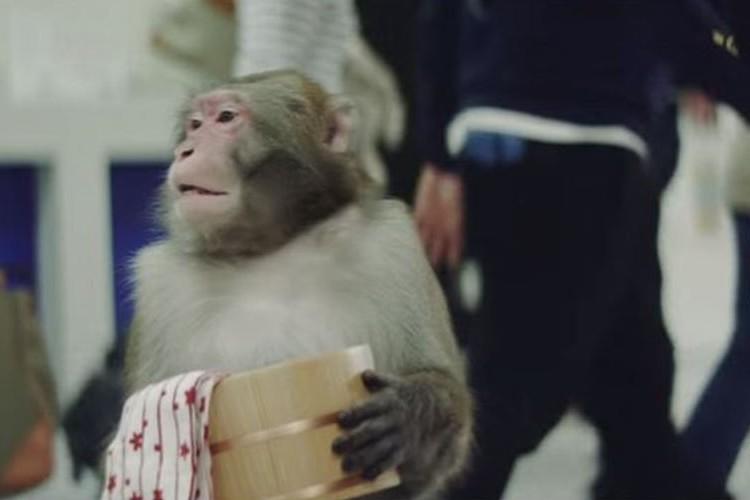 猿よ、どこへ向かうのか!?可愛くてほっこりする動画が話題に!