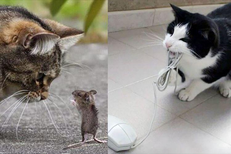我々だって、進化するのニャ…!?テクノロジーと共に変わりゆく猫の生き様