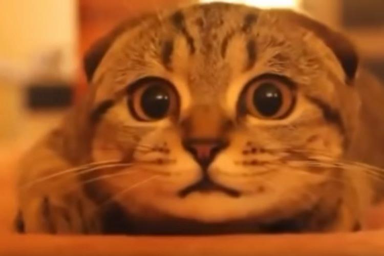 め、目が離せない…!!ホラー映画を見ている猫のムービーが可愛すぎる