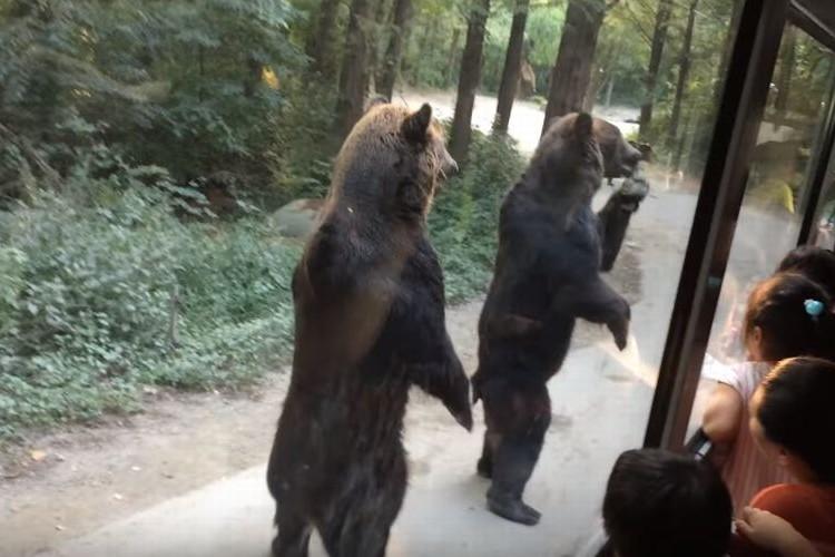 「中に人がいるだろ」とツッコミが多発!2頭のクマさんが人間っぽいと話題に!