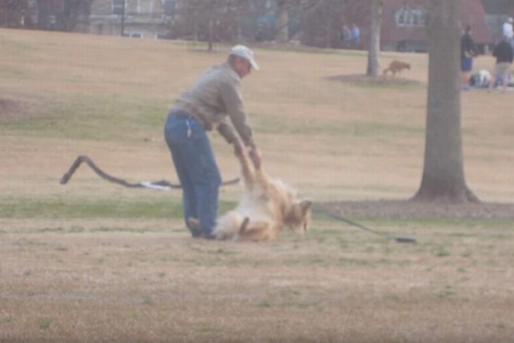 「いやだ~!帰りたくないよ~」公園で駄々をこねる犬が微笑ましい
