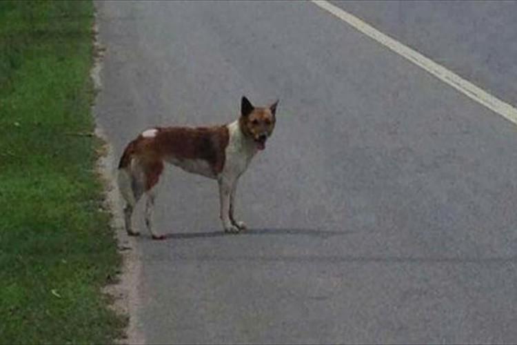 飼い主に捨てられた犬が、2ヶ月間も同じ場所で飼い主を待ち続けた結果…