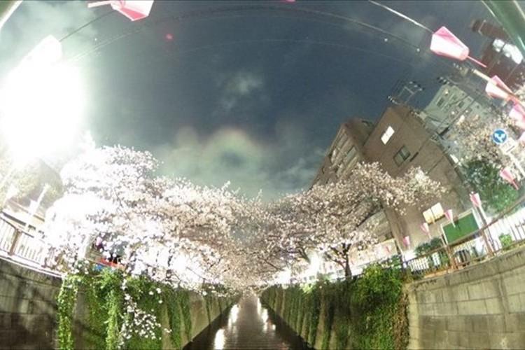 """グリグリ動かすだけで桜を満喫!浅倉大介が""""360°全方向撮影""""した目黒川の夜桜が素敵!"""