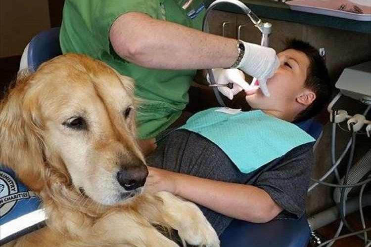 """治療を怖がる子供たちを和ませる…小児歯科で""""歯科助手として働く犬""""が話題に!"""