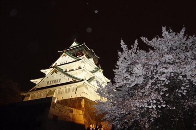「あぁ、日本人でよかった…」満開の夜桜とライトアップされた大阪城の共演が幻想的!