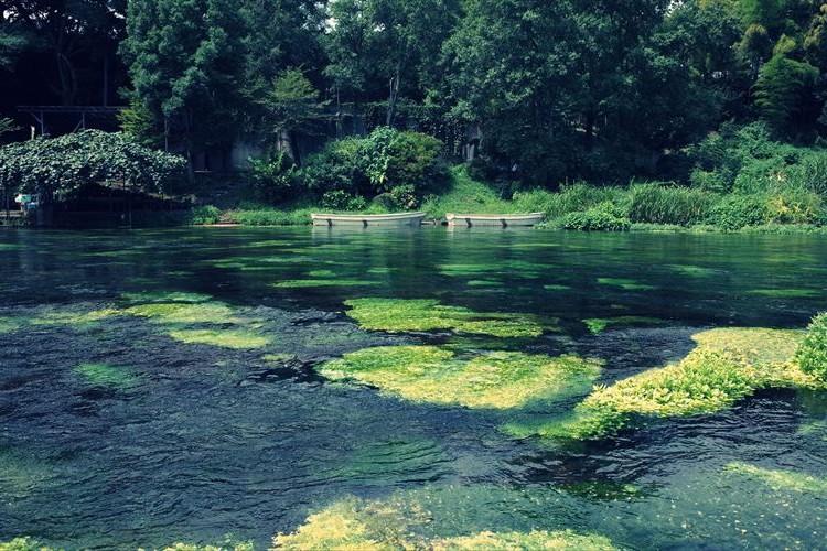 時が止まるほどの美しさ…日本三大清流の「柿田川」が綺麗すぎる【都心から2H】
