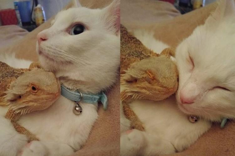ネコとトカゲの意外な組み合わせ。ふたりはいつも一緒