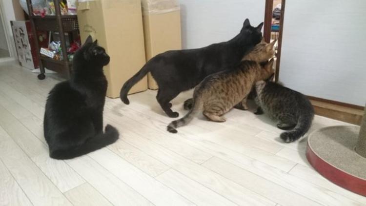 ふすまの間から4匹そろってチラッ!かわいすぎる猫タワーが完成しちゃう