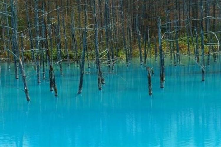 一度は行ってみたい!北海道美瑛町の「白金青い池」が幻想的で美しいと話題に!