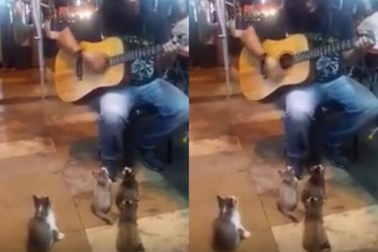 観客は子猫4匹。ストリートミュージシャンの演奏に耳を傾ける姿がかわいい