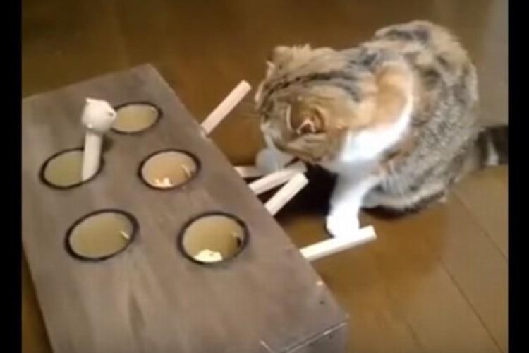 「こいつ、素早いニャ!?」絶対に捕まえれないジレンマと闘うネコがかわいい