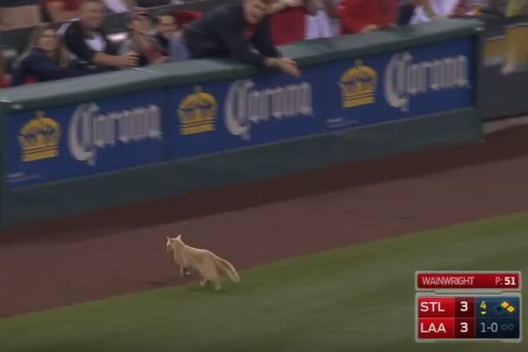 メジャーの試合にネコが乱入!とんだ珍客に球場大盛り上がり!