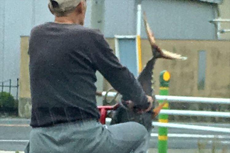 「そう、これが銚子」買い物袋から飛び出すネギのように、マグロが飛び出す!