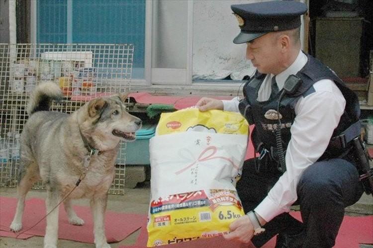 ワンコの愛が飼い主を助けた!自宅で倒れた飼い主の所まで警察官を誘導!