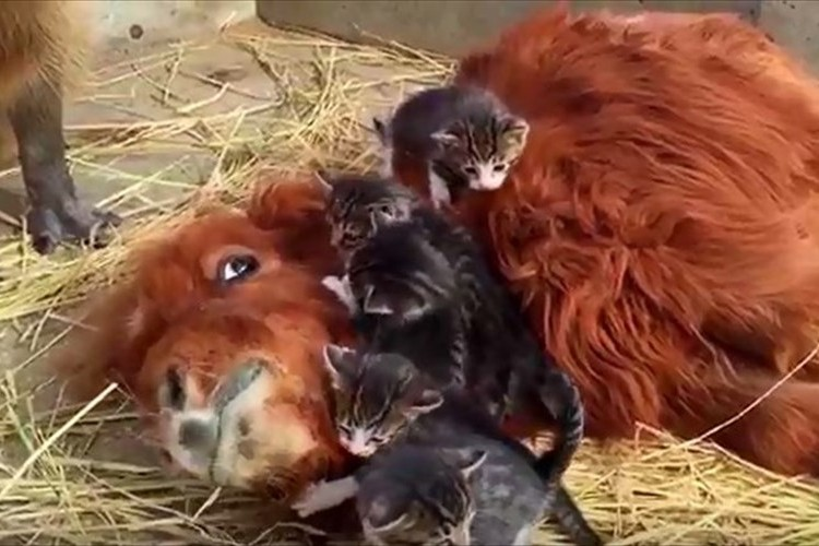 ミニチュアホース&子猫&カピバラ…見ているだけで幸せな気持ちに♪長野スエトシ牧場