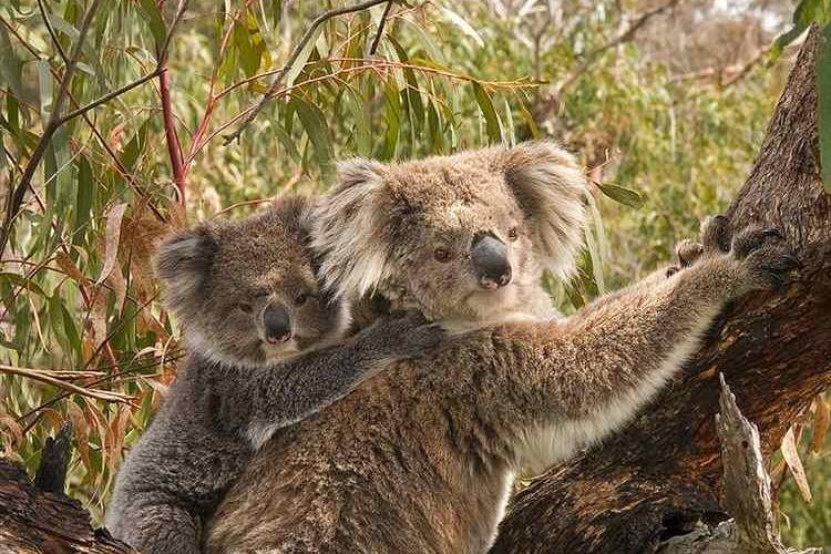 コアラってそんなに寝ているの!?意外と知らない動物達の睡眠時間とその理由