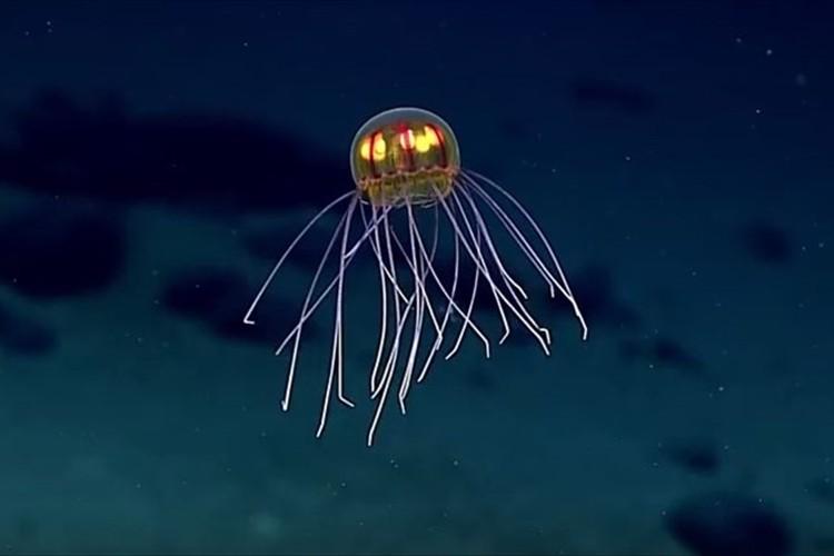 【動画】UFOにも見える! 深海で発光する新種のクラゲを発見! 撮影に成功