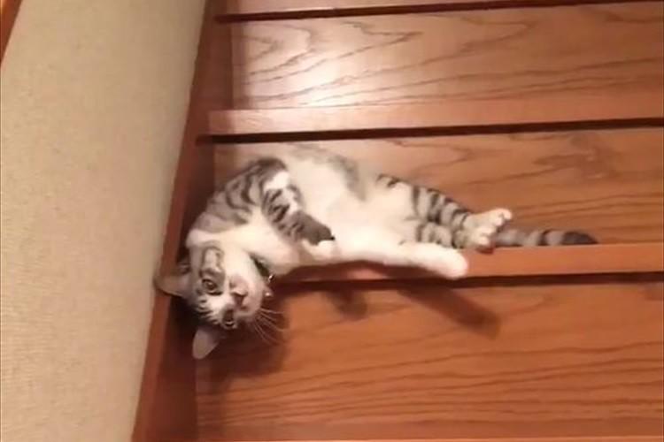 """【動画】""""流れるように階段を降りるダルダルな猫""""が微笑ましいと話題に!"""