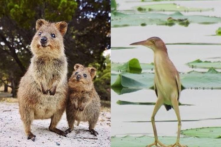 【必見】ハッシュタグ「#秘密にしておきたかった生き物」に集まるレアな生き物!